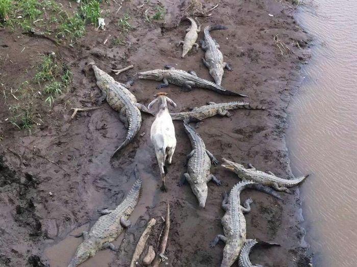 funny_animals_17