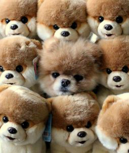 84825-camouflage-animals-pets-chow-puppy
