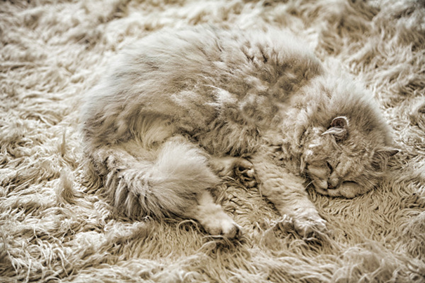 camouflage-animals-pets-funny-32__605