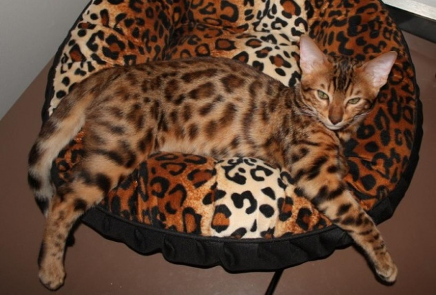 camouflage-pets-disguise-10
