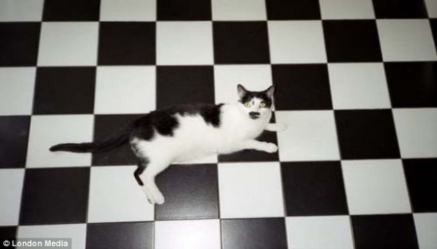 camouflage-pets-disguise-16