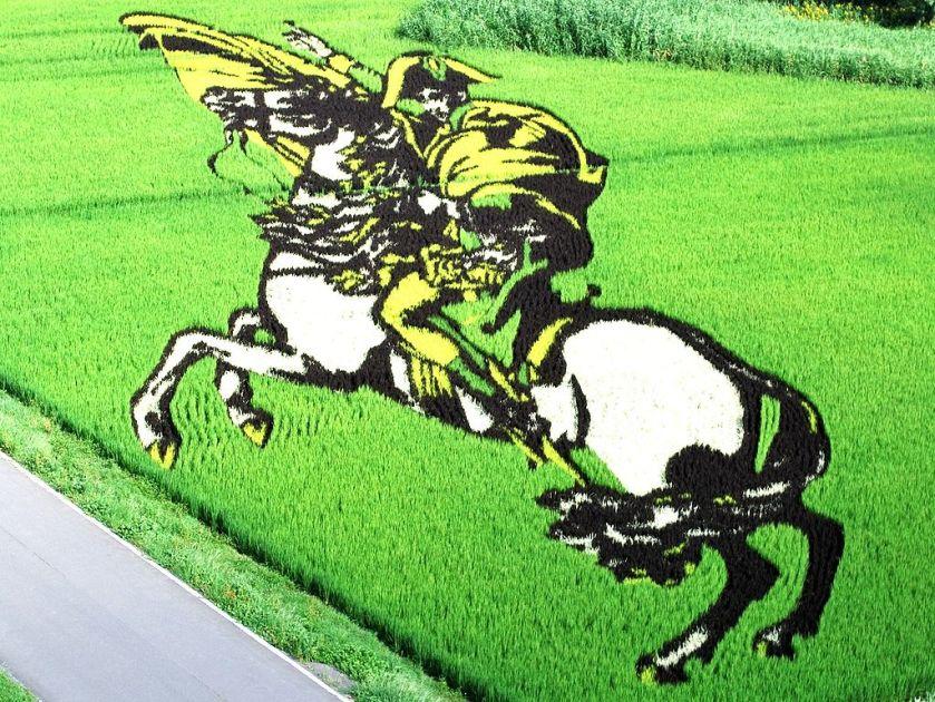 1024px-Napoleon_of_rice_field_art