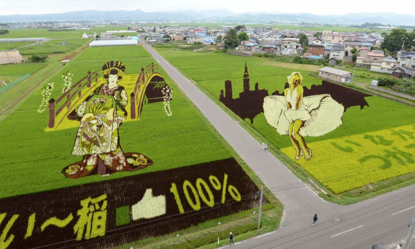 """An aerial view is seen of several kinds of rice plants depicting a Japanese """"Oiran"""" or traditional courtesan and actress Marilyn Monroe at the rice fields in Inakadate town"""