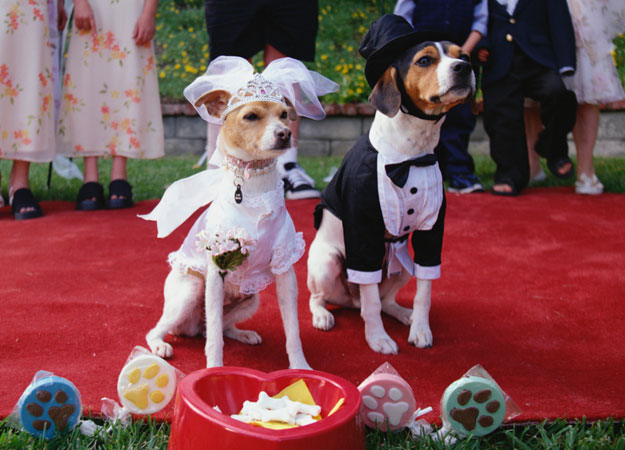 animal-weddings-8