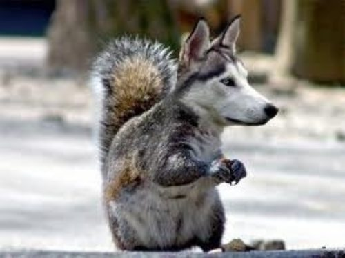 animals-morphed-15