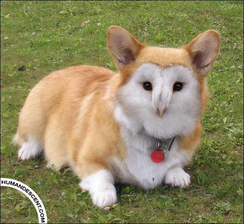 animals-morphed-18