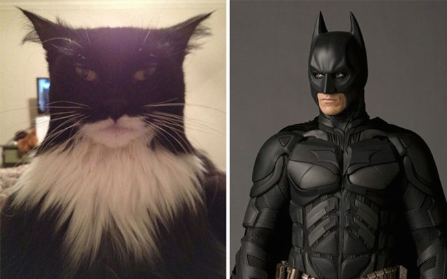 cat-looks-like-other-thing-lookalikes-celebrities-48__700