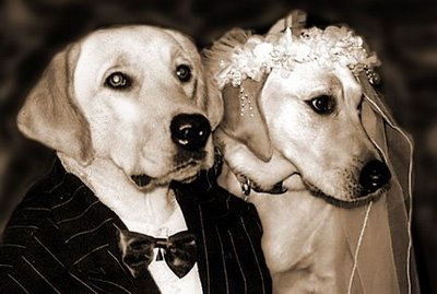 dogs-marriage