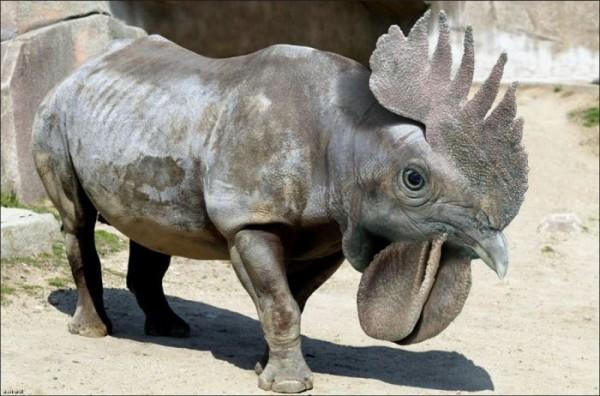 funny-weird-animals-32-desktop-wallpaper