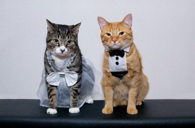medium-cat-cute-15-cute-animal-couples-ruining-the-sanctity-of-marriage