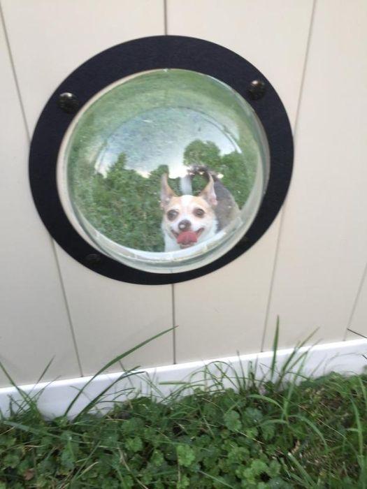 porthole_for_dogs_05