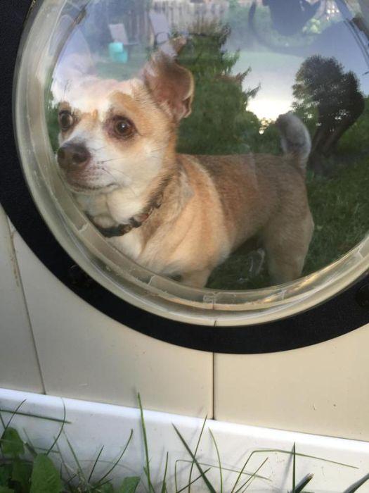 porthole_for_dogs_06