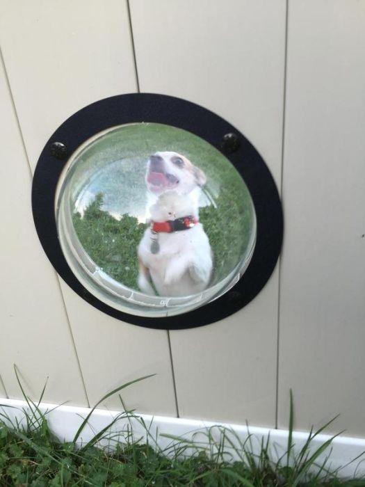 porthole_for_dogs_07