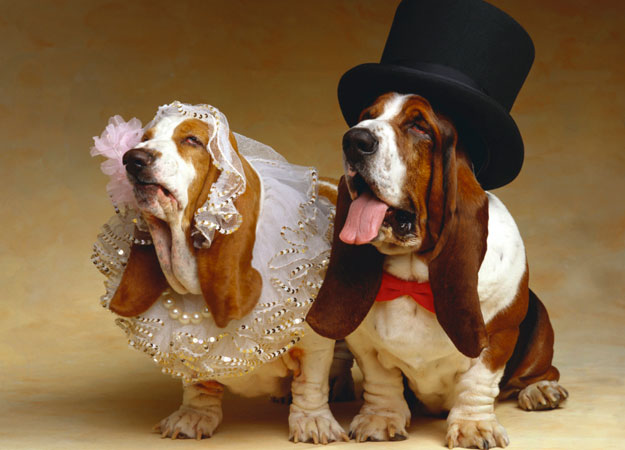 who-said-that-animals-cant-get-married-1