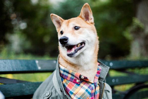 3037084-inline-s-10-he-business-of-menswear-dog