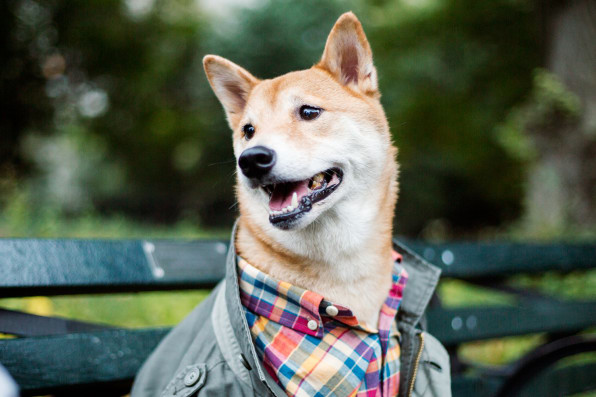 3037084-inline-s-10-he-business-of-menswear-dog