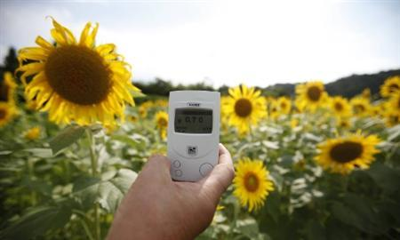 A geiger counter is placed in front of sunflowers in full bloom in Fukushima, northern Japan