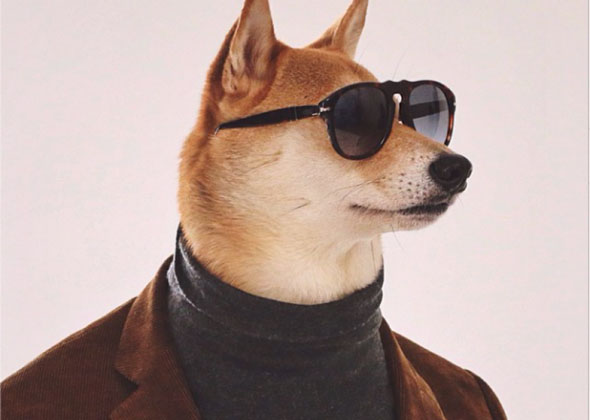 mensweardog.jpg