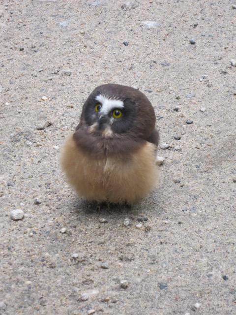 owl_police_02