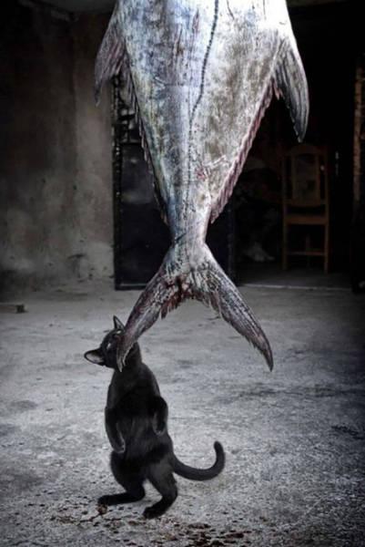 pets_were_caught_05