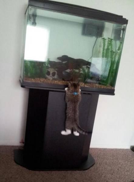 pets_were_caught_14