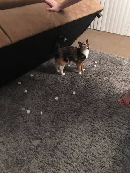 pets_were_caught_20
