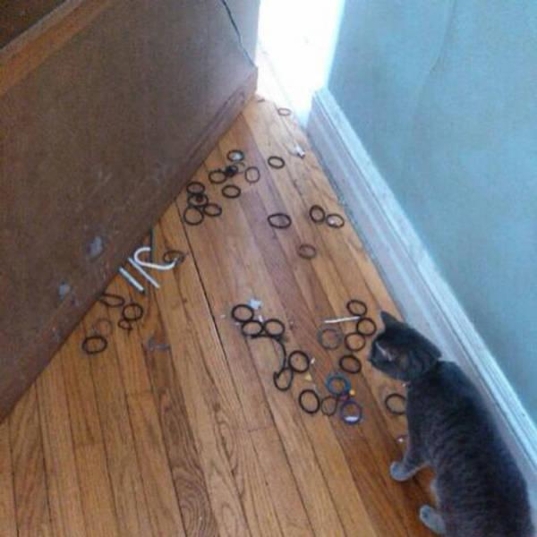 pets_were_caught_27