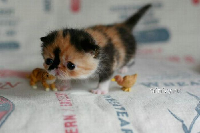 adorable_tiny_kitten_01