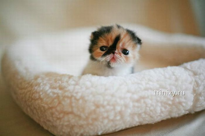 adorable_tiny_kitten_06