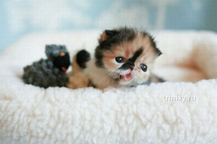 adorable_tiny_kitten_08