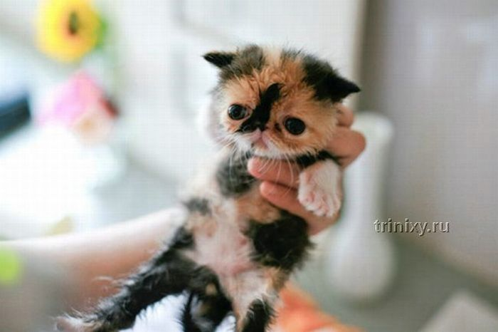adorable_tiny_kitten_14
