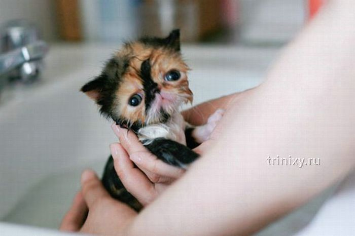 adorable_tiny_kitten_15