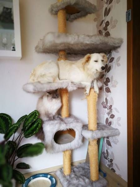 dogs_cats_04