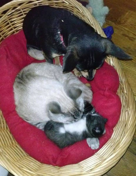 dogs_cats_06