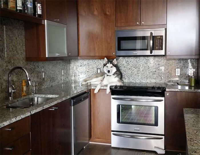 dogs_cats_08