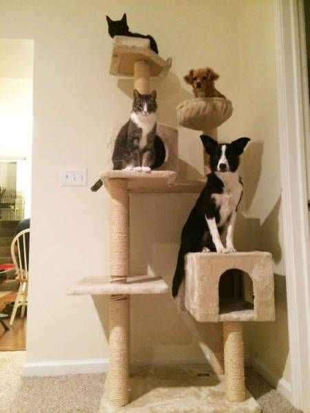 dogs_cats_10