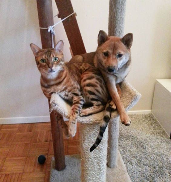 dogs_cats_16