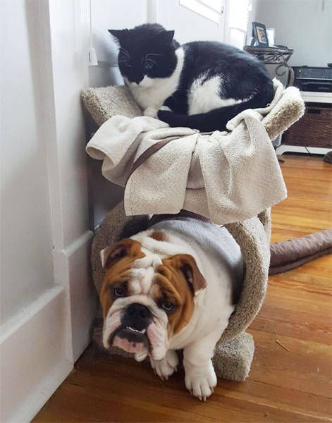 dogs_cats_17