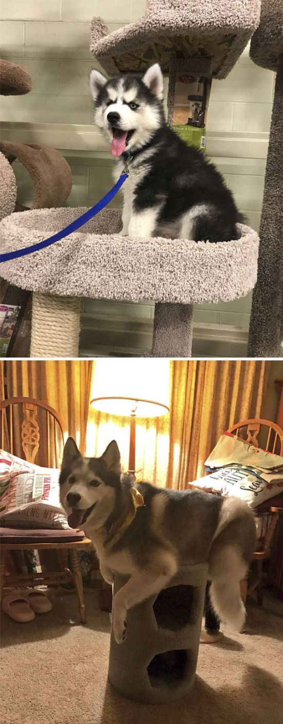 dogs_cats_23 (1)
