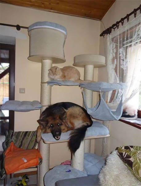 dogs_cats_26