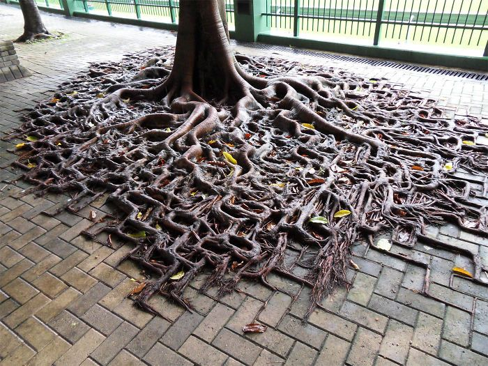 trees_refuse_to_give_up_03