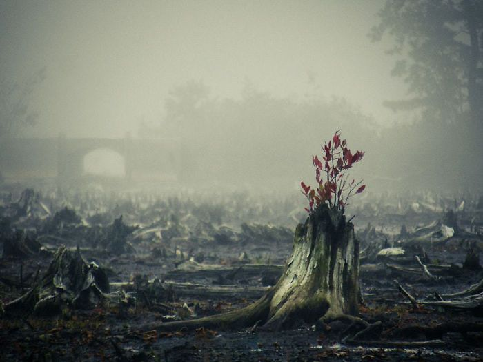 trees_refuse_to_give_up_09
