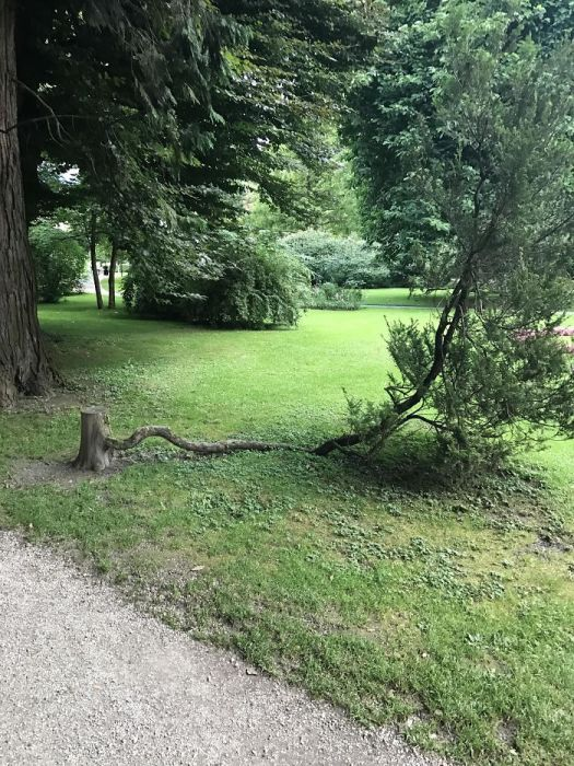 trees_refuse_to_give_up_10