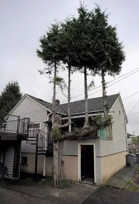 trees_refuse_to_give_up_23