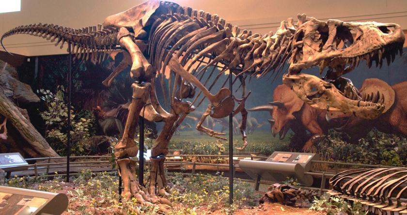 CMNH_Tyrannosaurus_Rex
