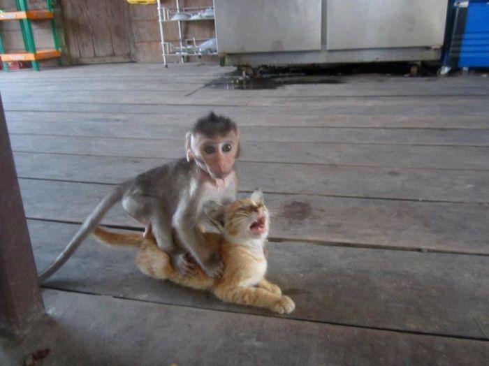 funny_animals_03
