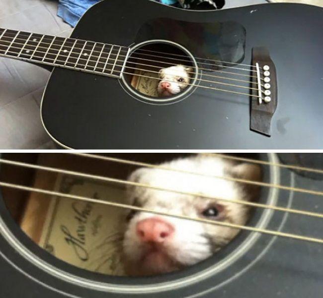 funny_animals_21