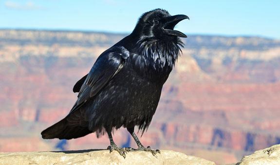 RavenHopiPoint