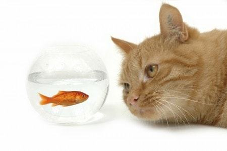 cat-with-fish-e1411392587875