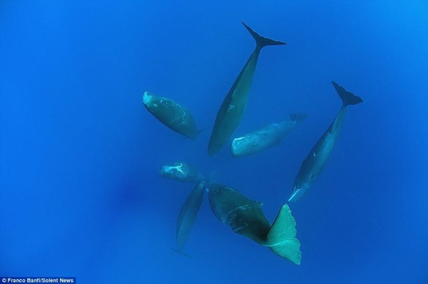 Cum dorm balenele (4)